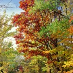 Autumn scene on trail (Robert Shunk)