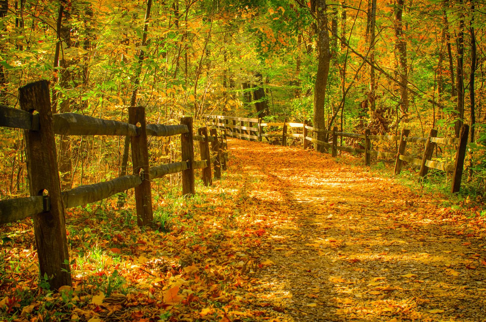 Blendon Woods - Metro Parks - Central Ohio Park System
