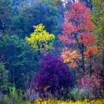 Autumn colors (Robin Miller)