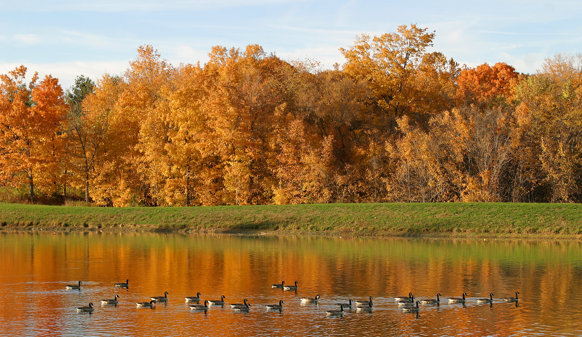 Geese on Buzzard's Roost Lake