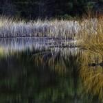 Wetland grasses (David Jolley)