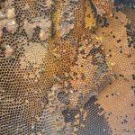 Walnut Woods Bee Hive