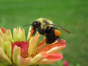 Bee on flower by Jen Snyder