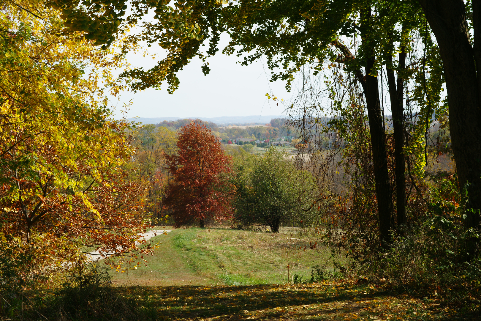 Autumn view looking down from the top of the Ridge Trail at Chestnut Ridge. Photo by Mike Fetherolf