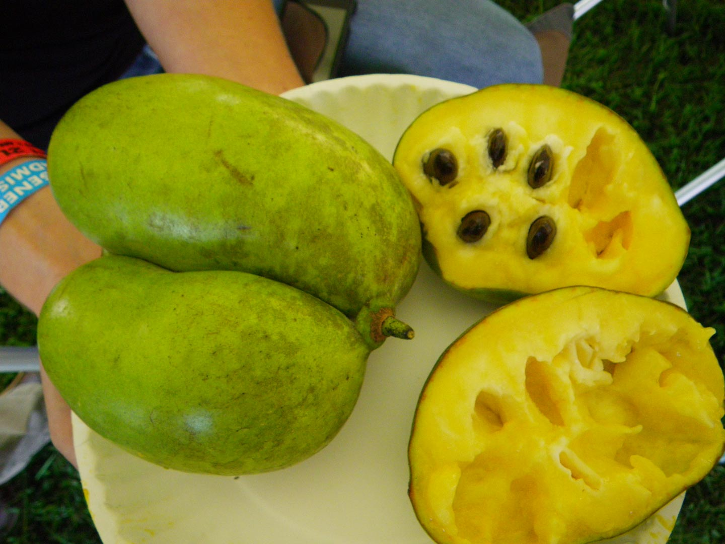 Cultivated Pawpaw By Alli Shaw