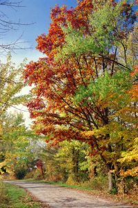 Autumn colors at Blacklick Woods by Robert Shunk