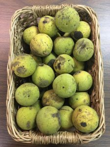 black-walnuts3-cody-1080px