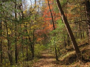 clc_hemlock-trail-with-color_kye-feasel-1080px