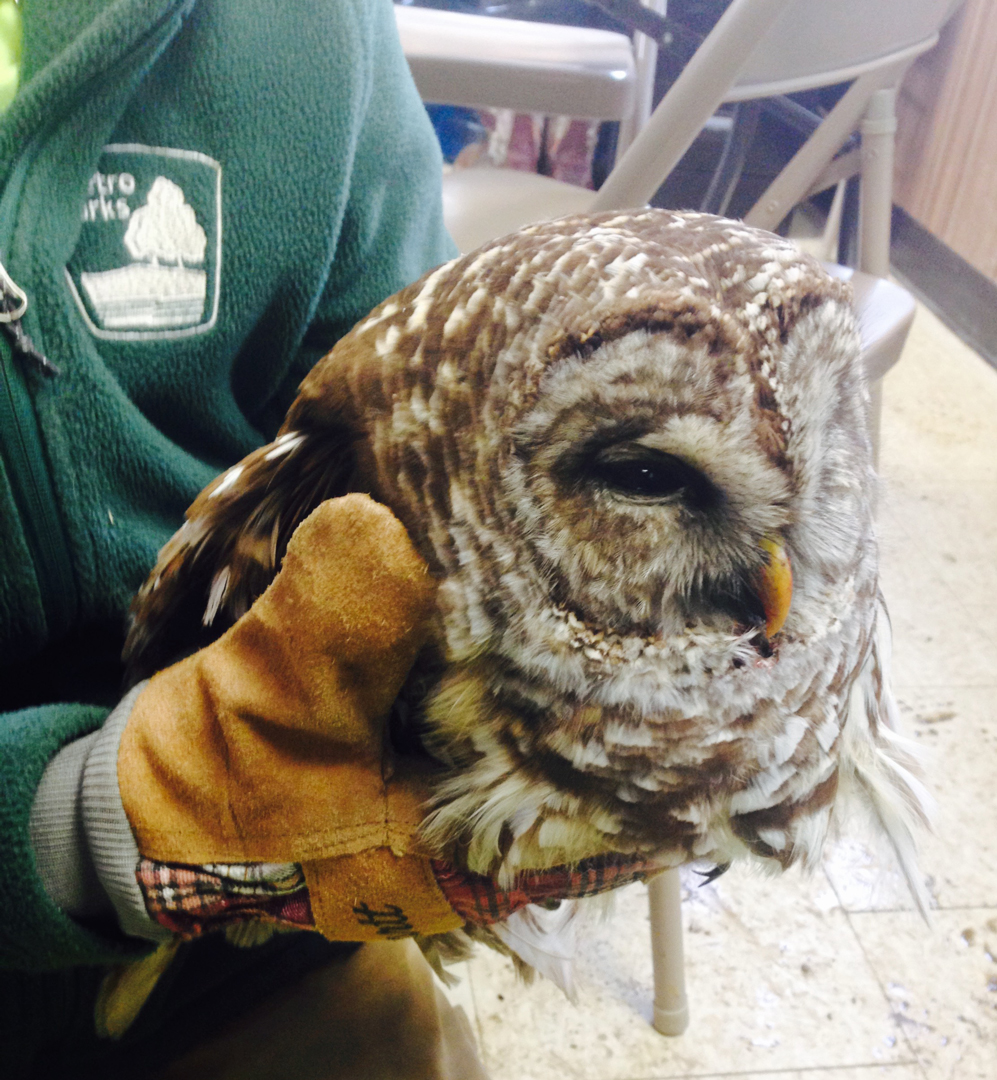 barred-owl-rescue-sgr