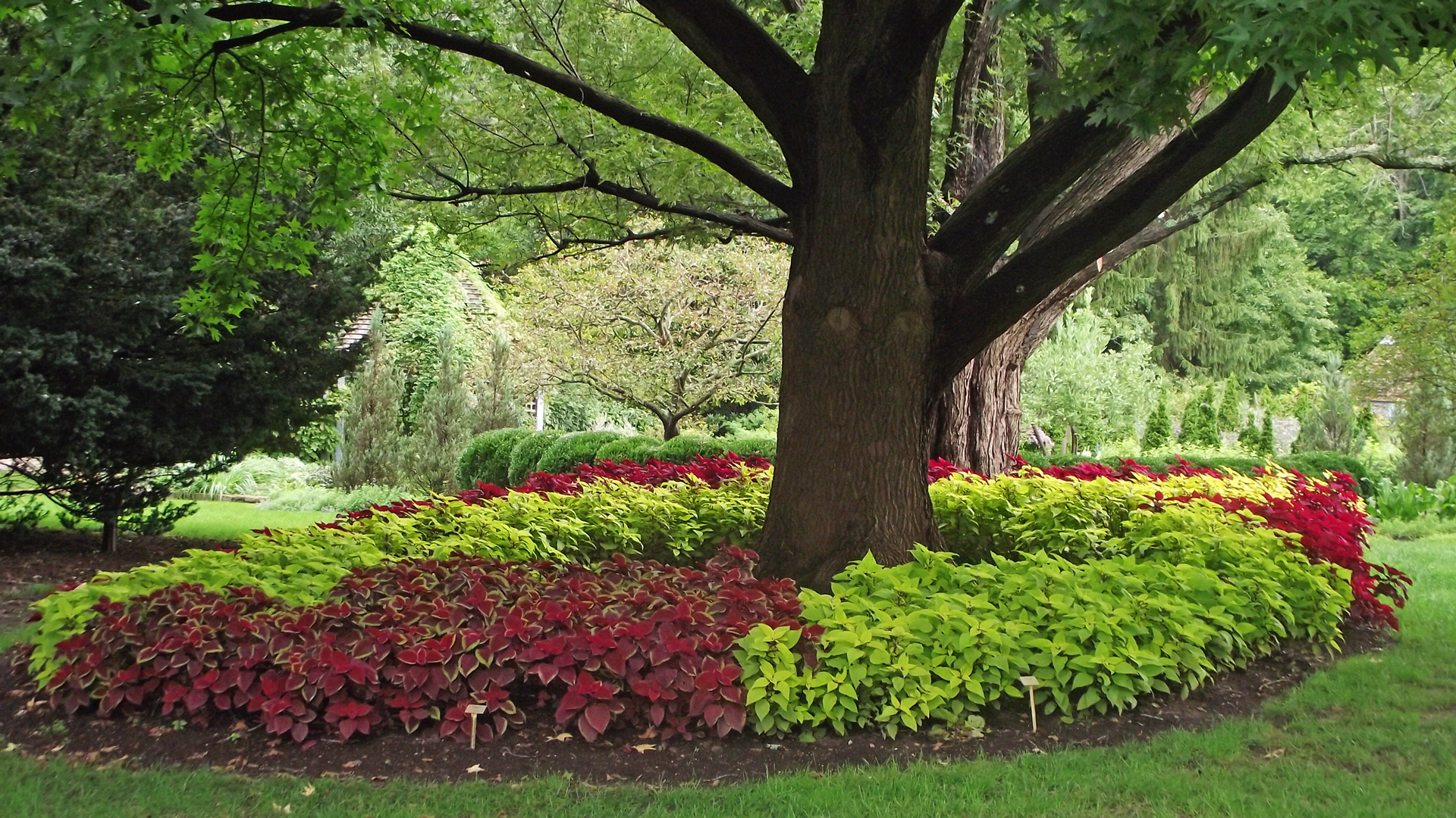 Five steps to an edible landscape metro parks central for Planting trees landscaping