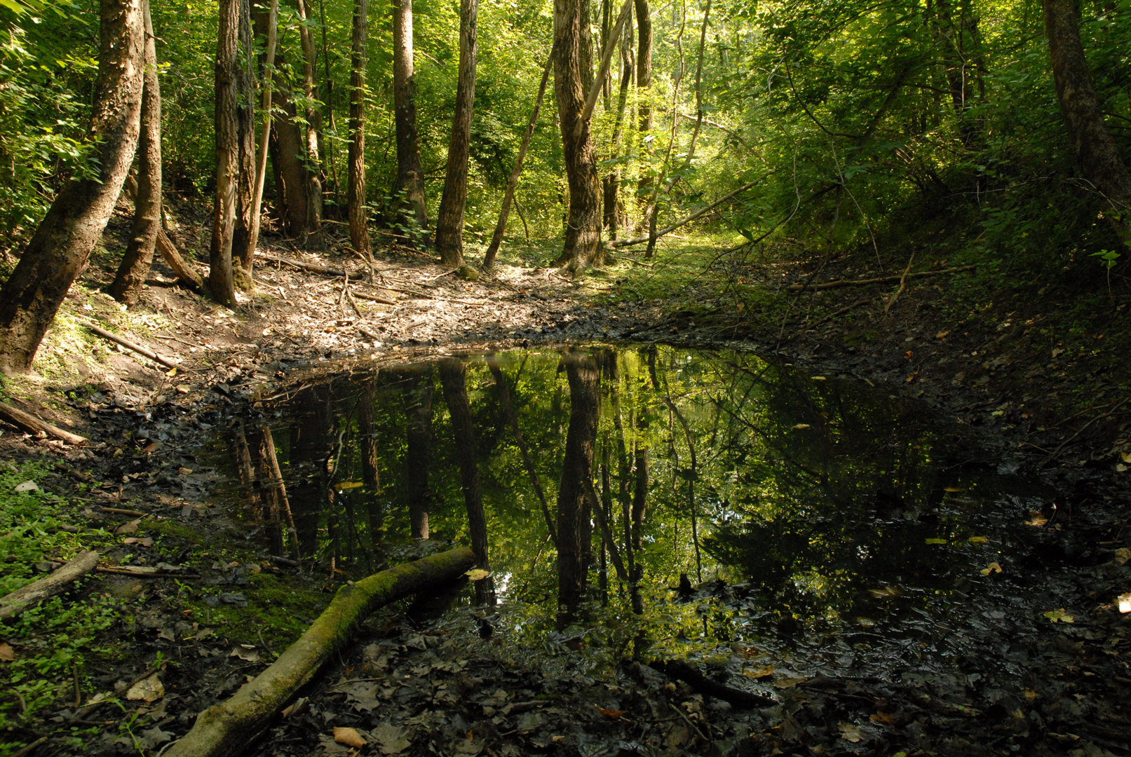 Vernal Pools Are The Annual Breeding Grounds Of Amphibians