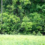 One deer emerges from woods while another retreats into them at Sharon Woods