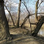 Winter trees on banks of the river at Scioto Grove
