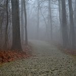 Foggy view along trail through the woods at Battelle Darby Creek