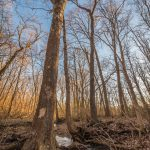 Narrow stream flows through woodland trees at Battelle Darby Creek