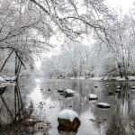 Olentangy River at Highbanks with all trees on banks covered in snow