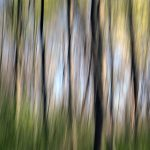 Abstract photo of trees entered in photo exhibition