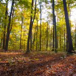 Sunlight illuminates leaves in early autumn forest at Blacklick Woods