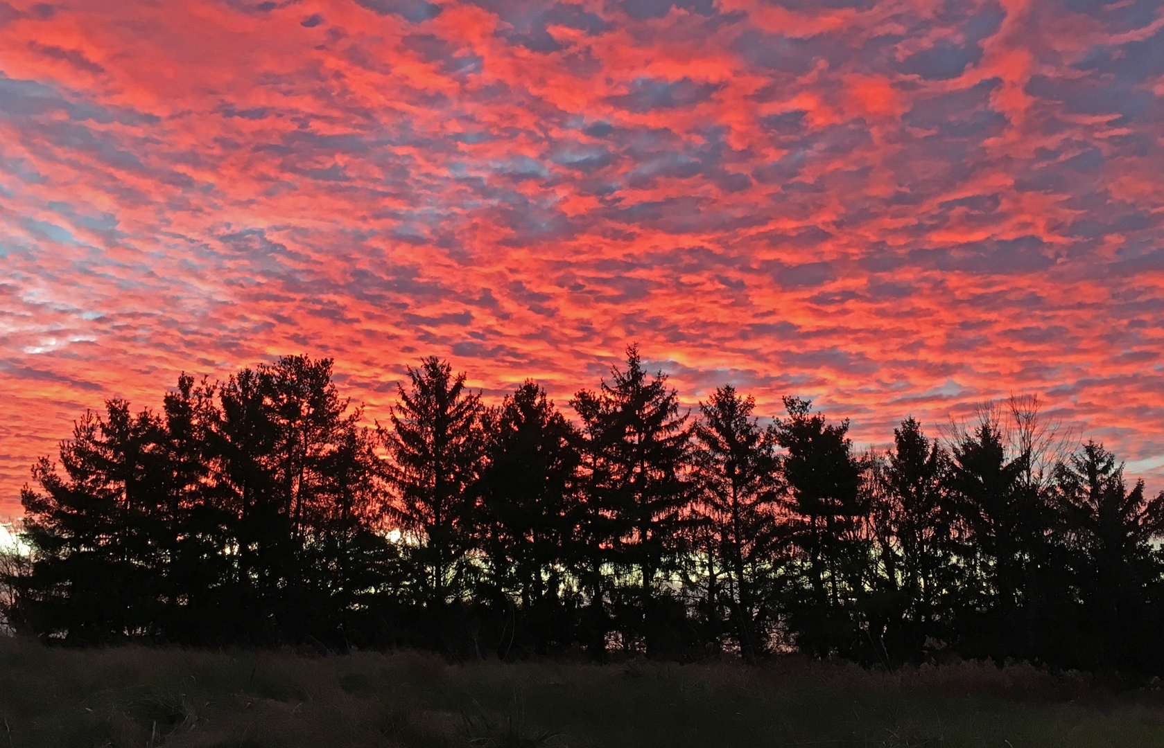 Picture this. A beautiful pink sky over the trees at Glacier Ridge Metro Park.