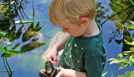 A young boy holds a bullfrog at Inniswood Metro Gardens