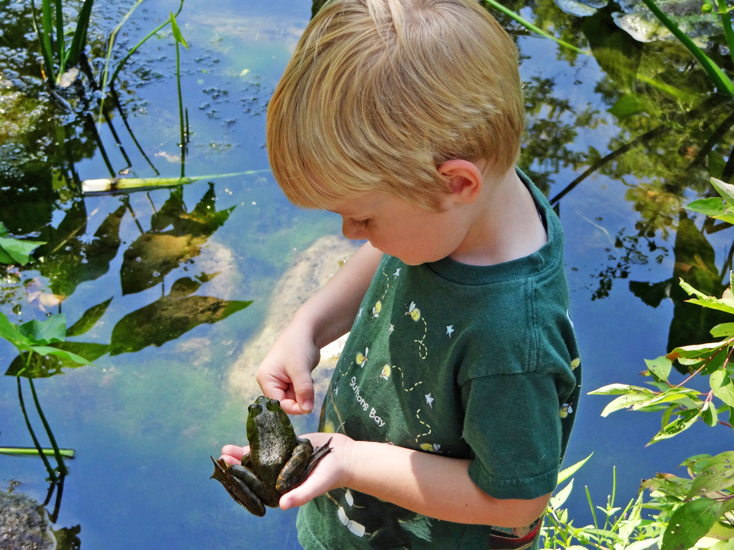 A young boy holds a bullfrog at Inniswood Metro Gardens during a program to introduce kids to wildlife and baby animals