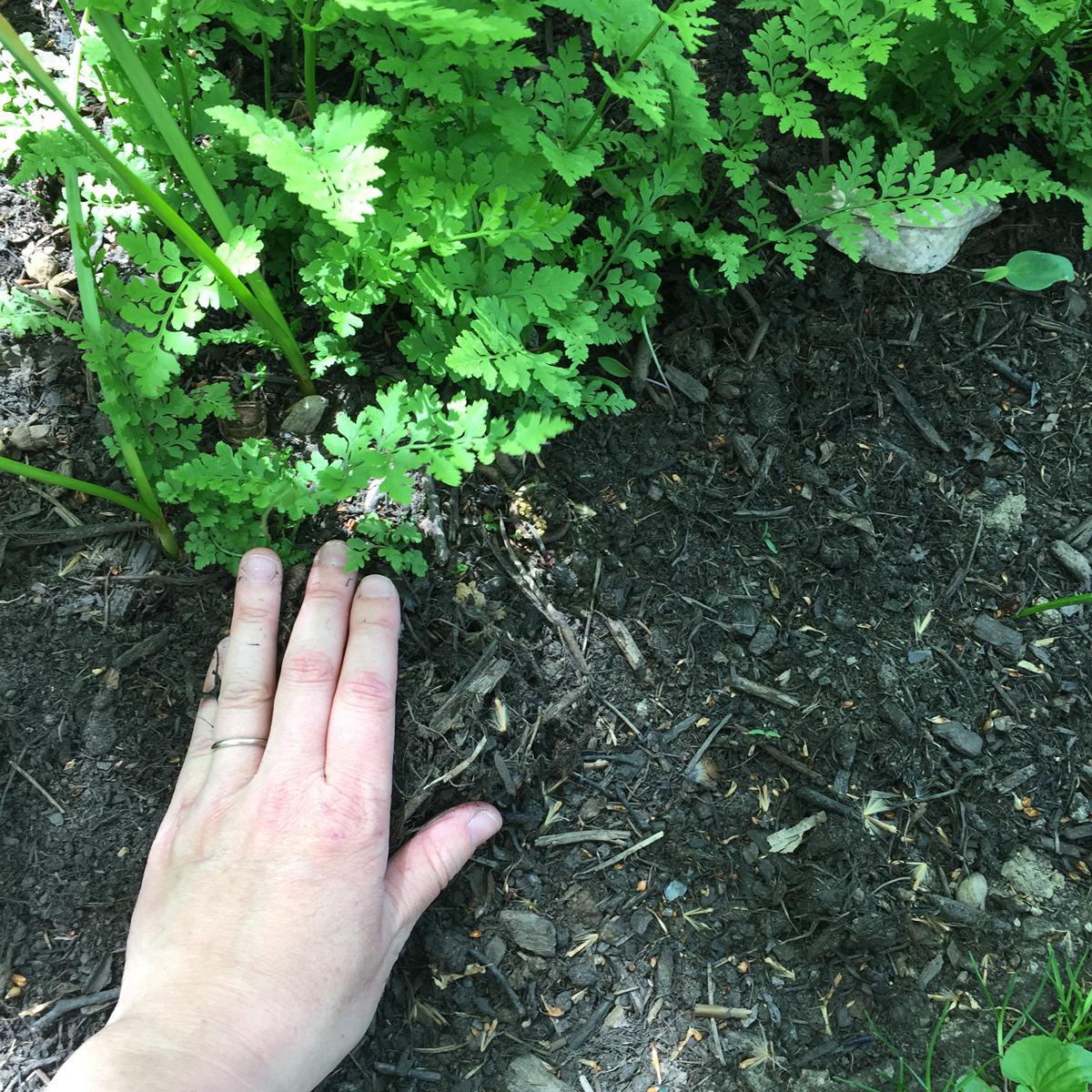 A two-inch layer of mulch applied to the gardens at Inniswood Metro Gardens as perennial plants begin to emerge