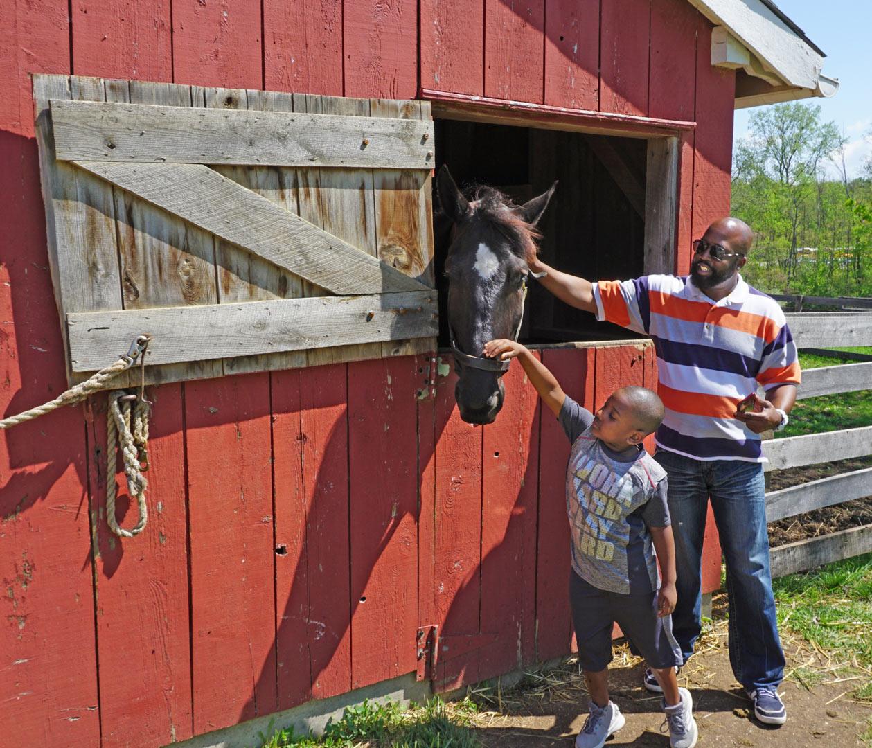 Vistors pet new Percheron horse Bob at Slate Run Farm