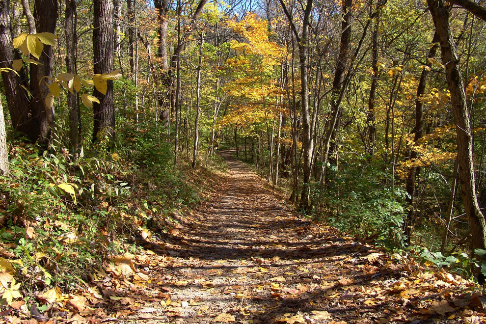 A view down a steep decline on the narrow Terrace Trail at Battelle Darby Creek Metro Park, with shows of fall color in the trees bordering the trail