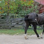 A visitor drives one of the Percheron work horses during a family overnight program at Slate Run Living Historical Farm