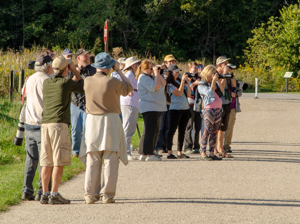A group of photographers were attracted to Battelle Darby Creek Metro Park when news began to spread that a Kirtland's warbler had been seen at the park