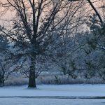 Winter sunrise at Blacklick Woods Metro Park