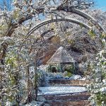 Wisteria arch at Inniswood on snowy day.