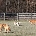 Dogs play in the dog park at Rocky Fork Metro Park