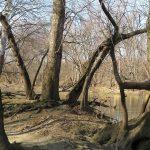 Trees on trail at edge of the Scioto River in Scioto Grove Metro Park