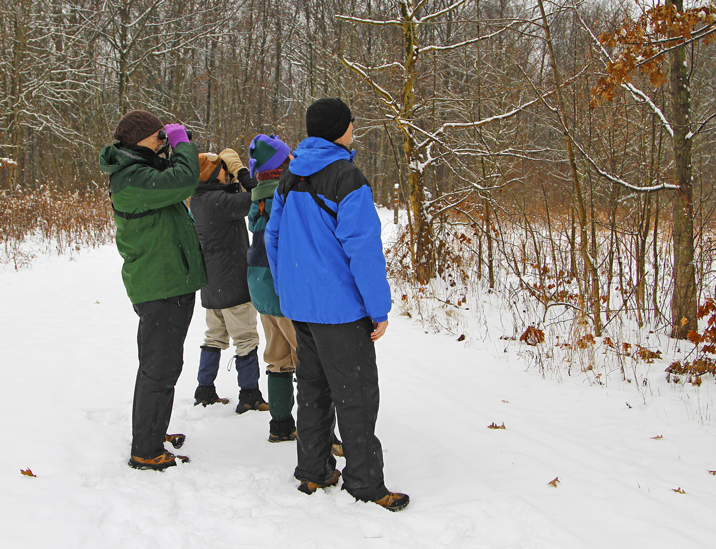 Birders look for birds on snowy day at Sharon Woods
