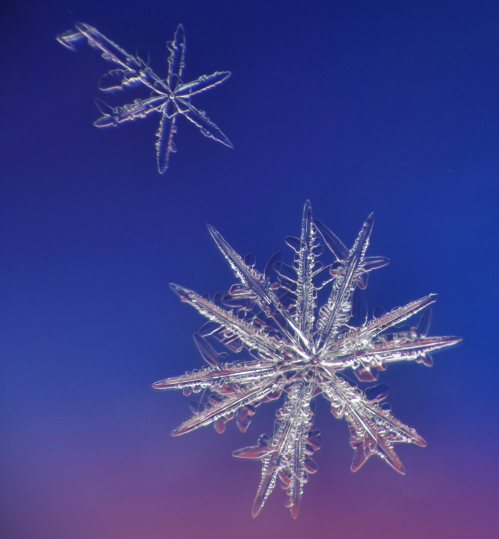 Close up view of snow flakes on blue background