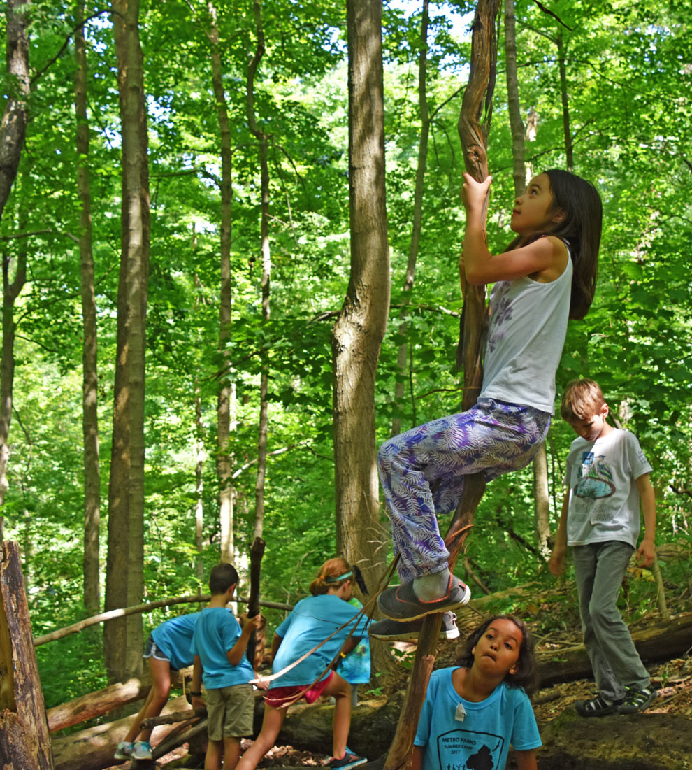 A girl climbs a tree in the natural play area at Sharon Woods, while other summer campers look on.