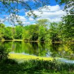Scioto River and banks of trees with spring leaves at Scioto Grove Metro Park
