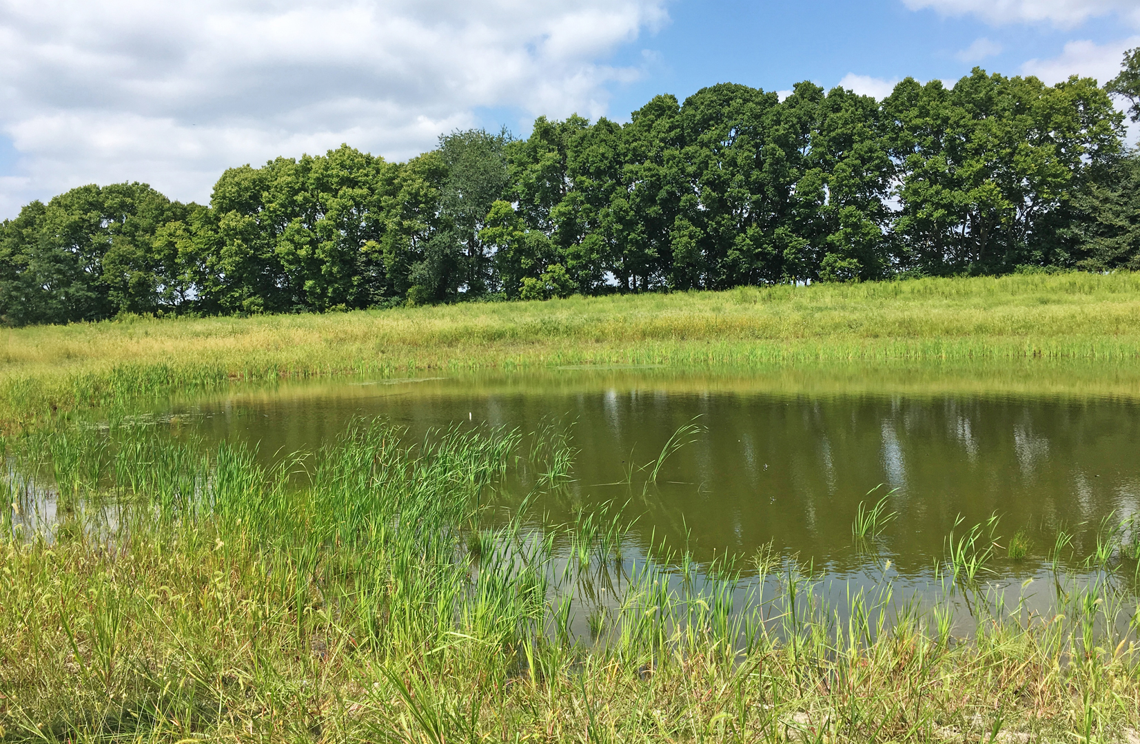 A restored kettle lake at Burning Lake area in Pickerington Ponds Metro Park