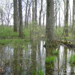 Swamp forest at Rocky Fork Metro Park