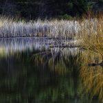 Wetland grasses at Slate Run Metro Park