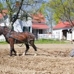 Farmer plows the fields at Slate Run Living Historical Farm, using work horses the 1880s way