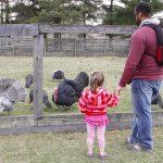 Visitors at the Slate Run Living Historical Farm's turkey pen