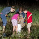 Visitors search for amphibians in the wetlands at Three Creeks
