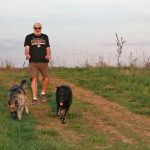 Visitor walks his dogs on the Kestrel Trail at Walnut Woods