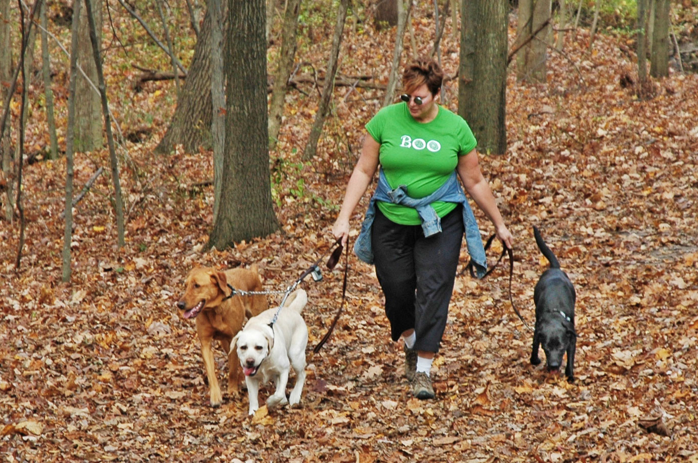 Visitor walks her three dogs on the Coyote Run Trail at Highbanks.